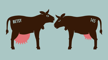 Dairy Cows With Names Make More Milk? | A Dairy Goddess's Blog